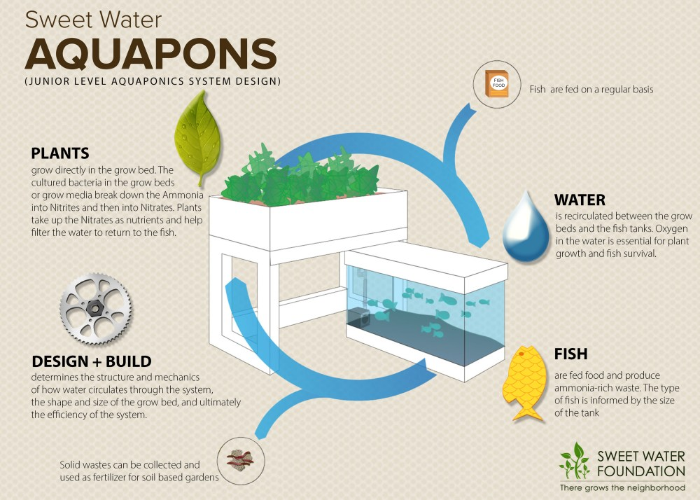 medium resolution of learn about the logic behind the aquaponic system by clicking on the image above