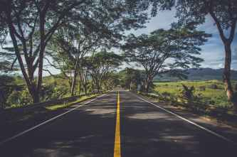 road surrounded by green trees