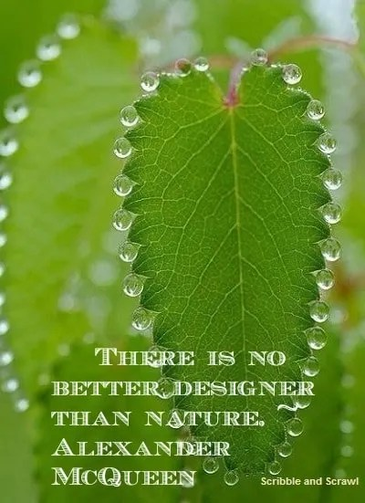 Nature design quote
