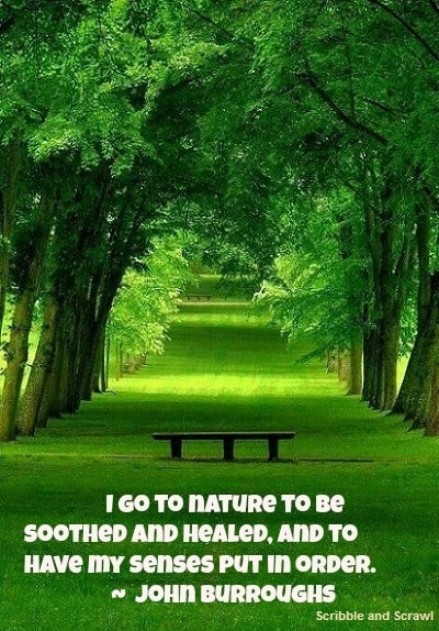 10 Quotes on how Nature inspires Creativity