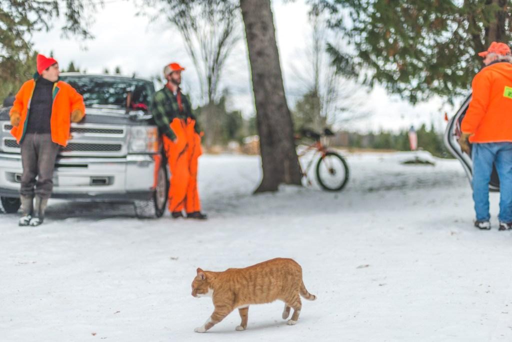 An orange tabby cat walks past three hunters in orange.