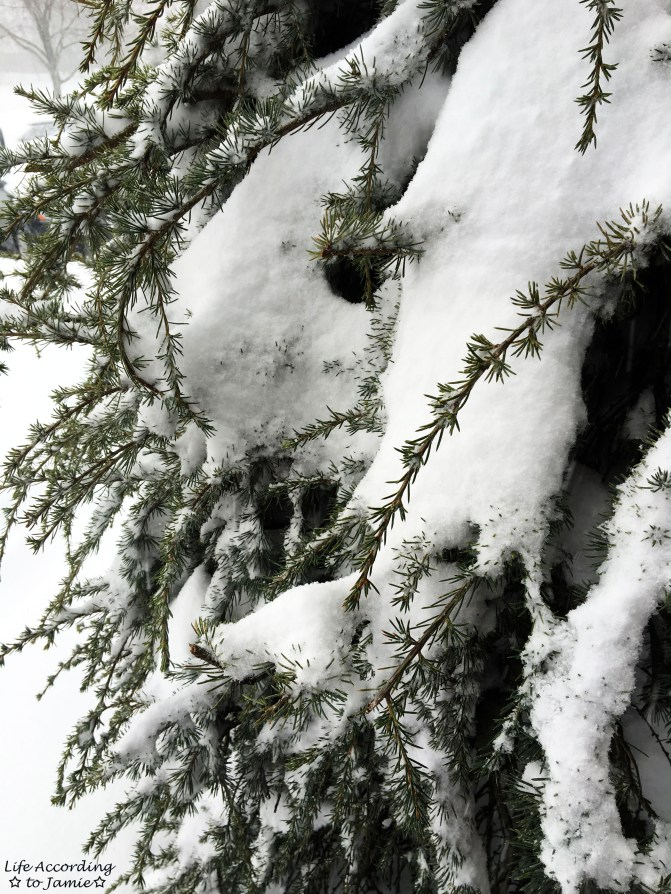 Weeping Pine & Snow