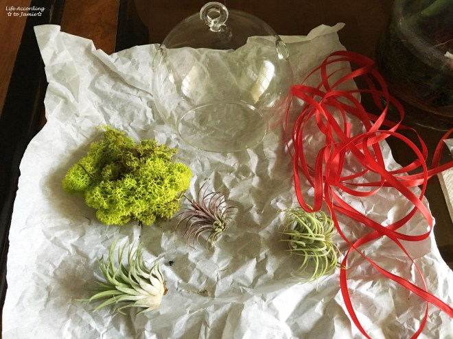 Vibrant Air Plant Terrarium Kit