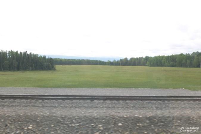 Alaska Rail View 2