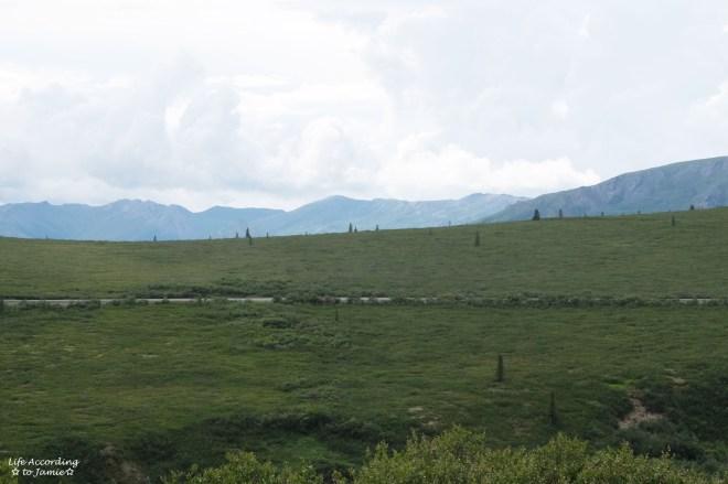 Denali National Park - Primrose Ridge 1