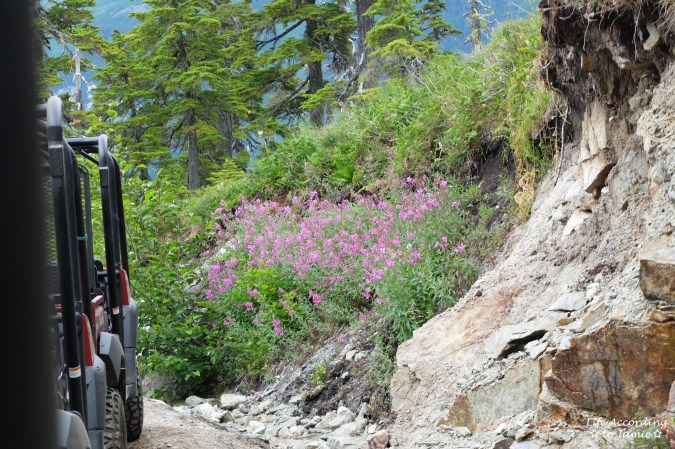 Takshanuk Mountain Trail - Fire Weed