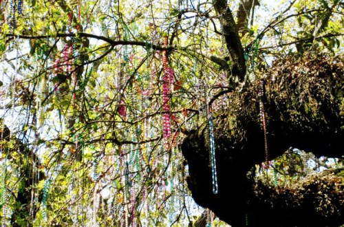 New Orleans beads in trees