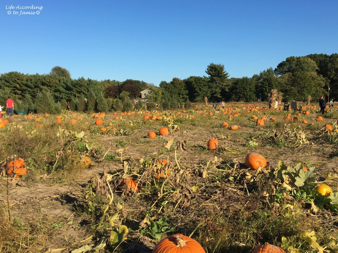 giamarese-farm-orchard-pumpkin-patch