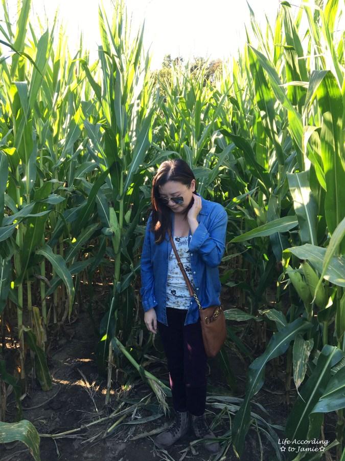 inside-corn-maze-1