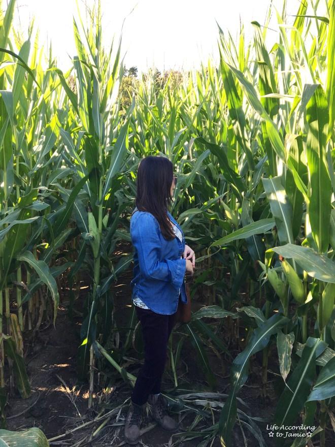 inside-corn-maze