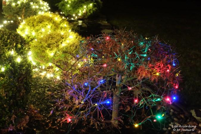 outdoor-christmas-lights-2