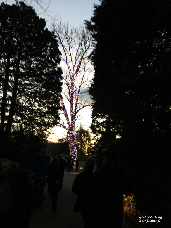 longwood-gardens-colorful-tree