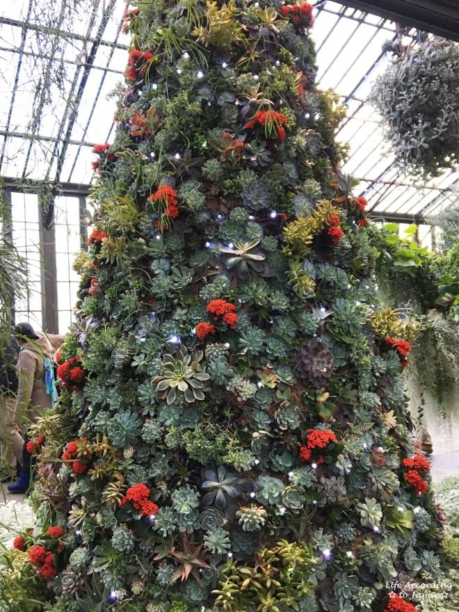 longwood-gardens-succulent-christmas-tree