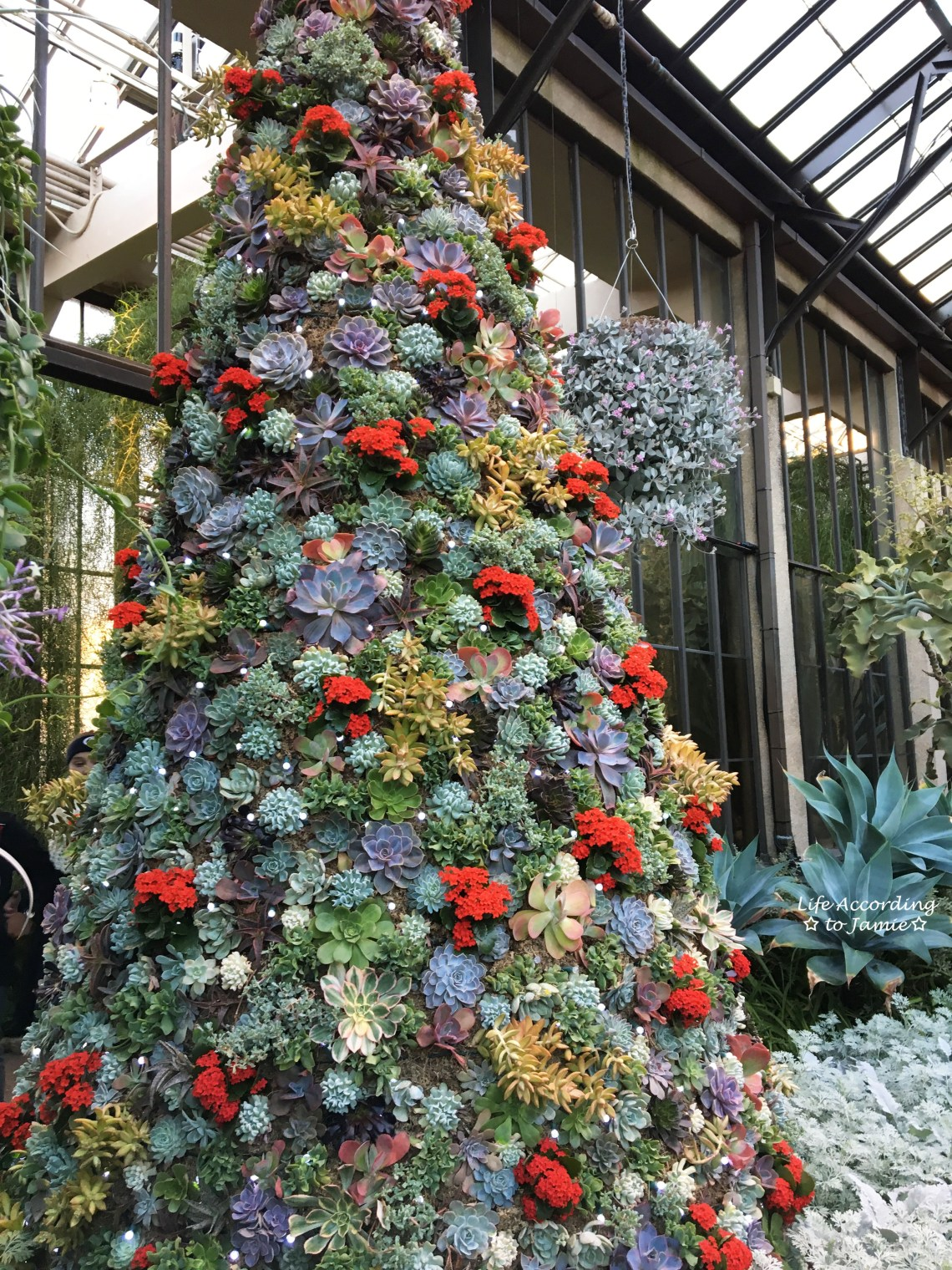 succulent-christmas-tree