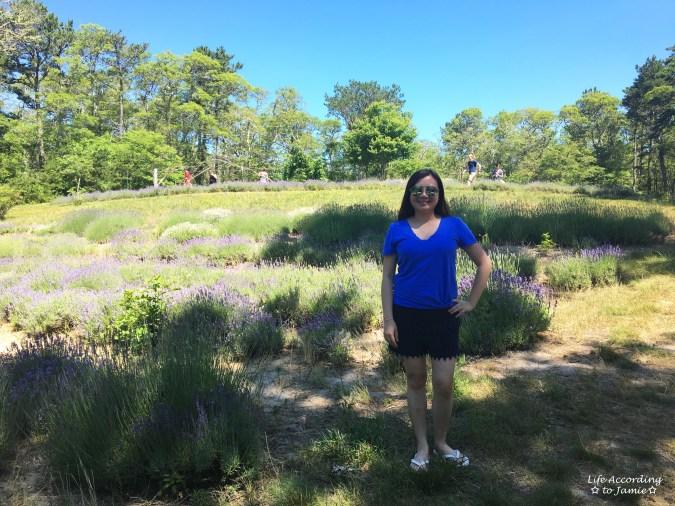 Cape Cod Lavender Farm 4