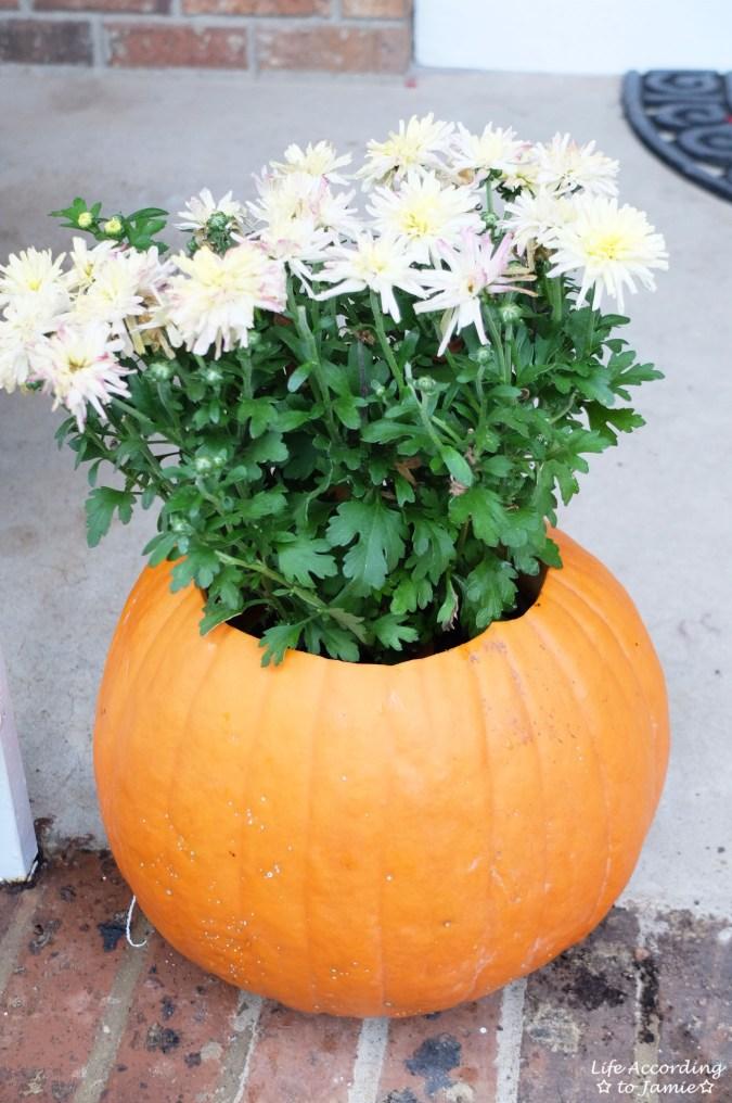 Pumpkin Planter + Mums 10