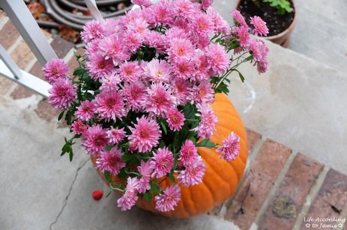 Pumpkin Planter + Mums 3