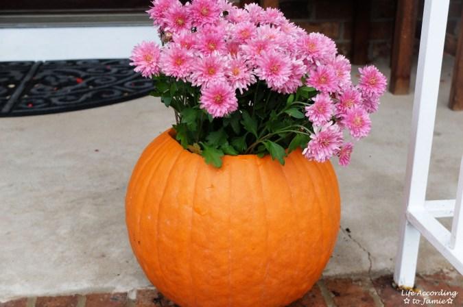 Pumpkin Planter + Mums 9