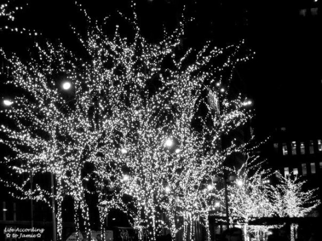B&W Christmas Lights in Trees