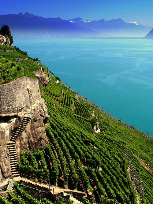 Lake Geneva - Vineyards