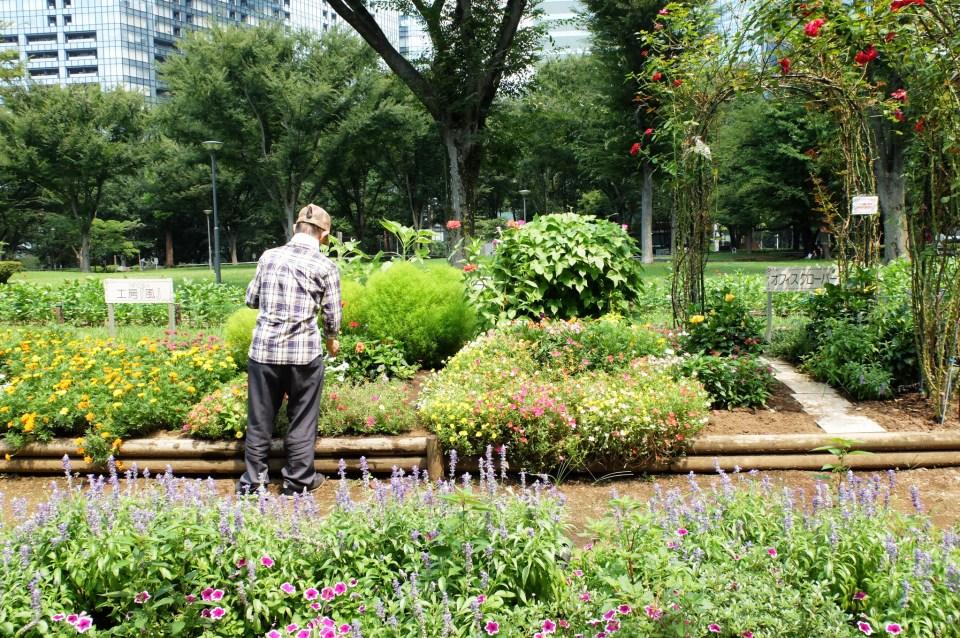 Shinkjuku Central Park - Garden