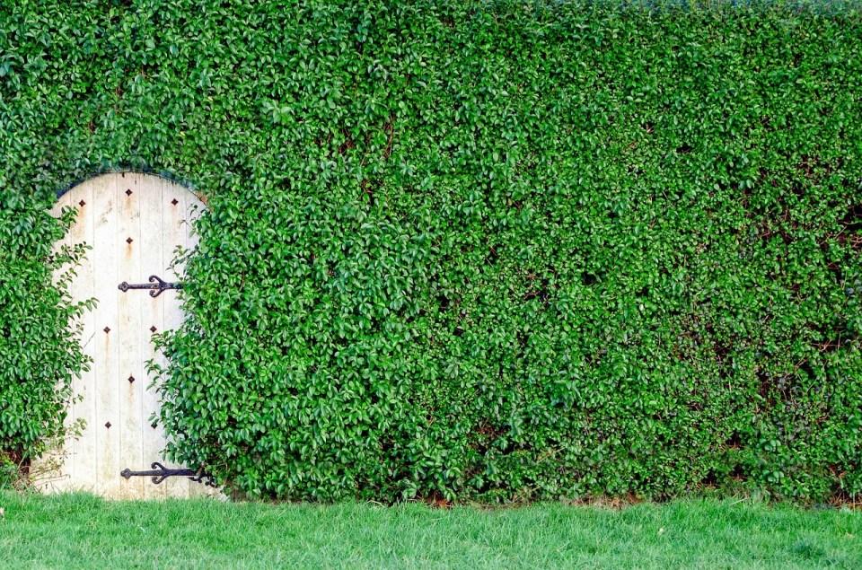 garden-315527_1280