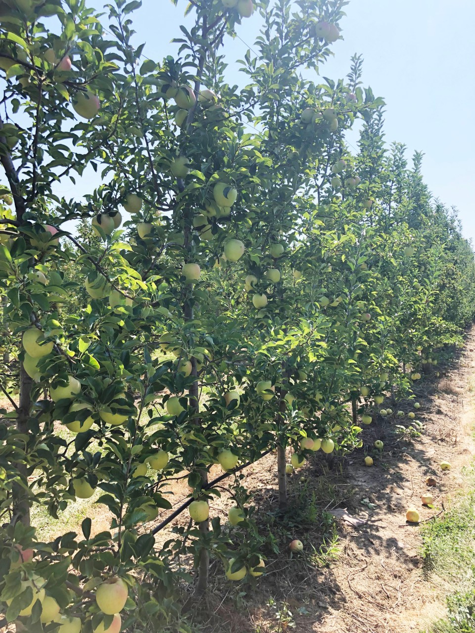Terhune Orchards 14