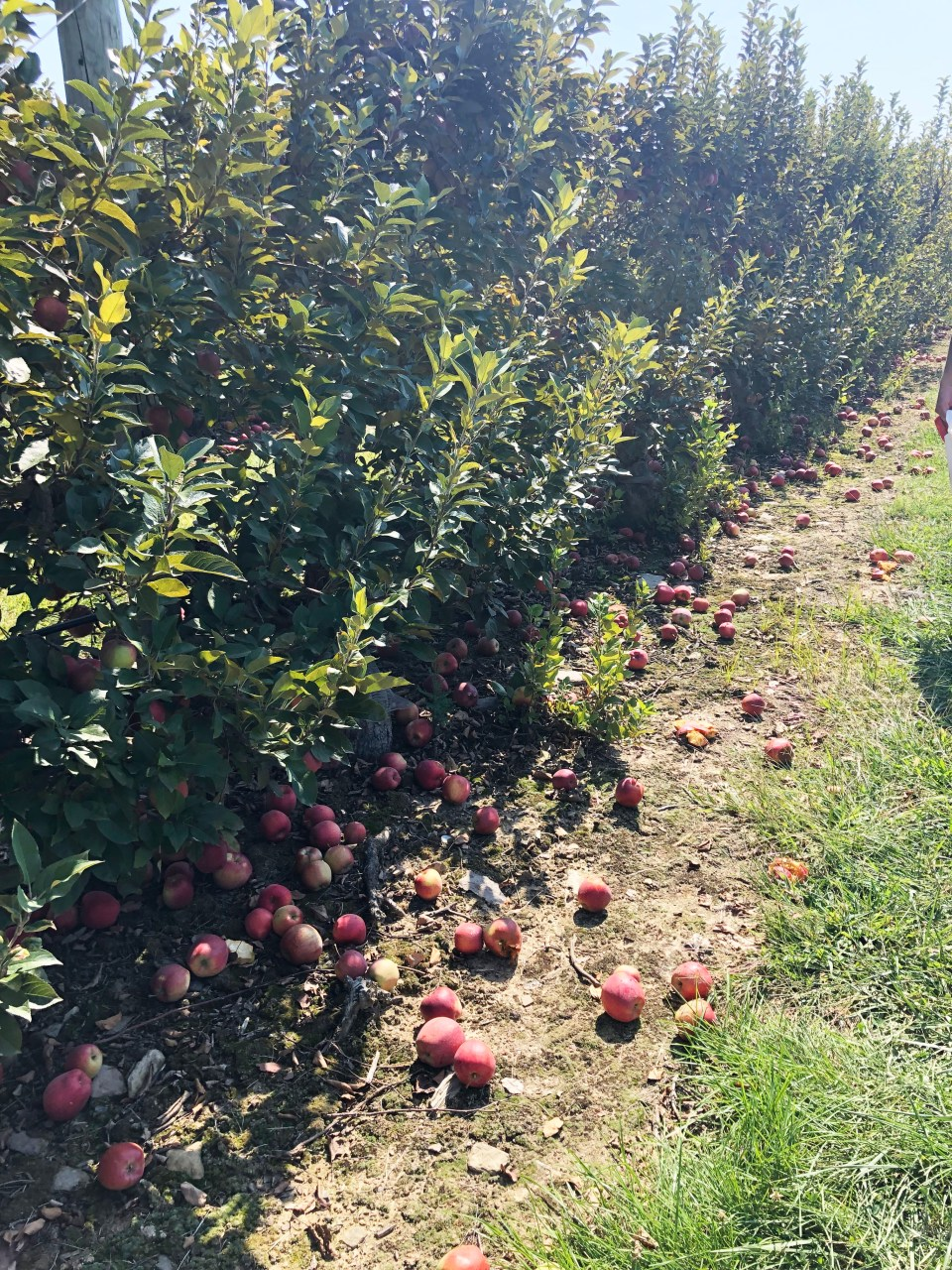 Terhune Orchards 17