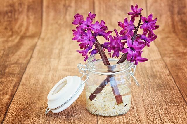 hyacinth-747131_640
