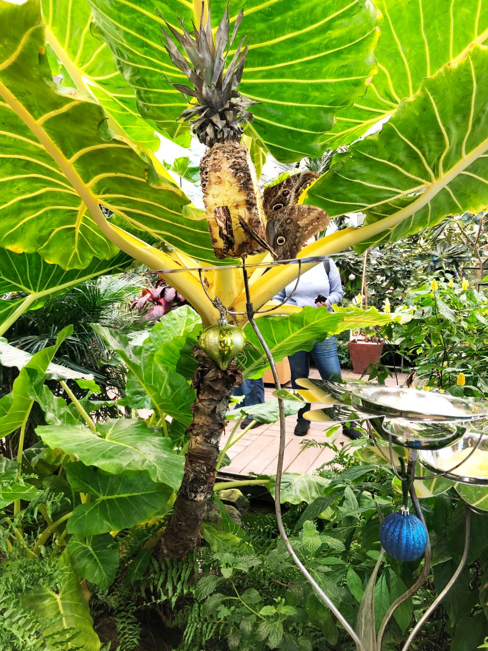 Hershey Gardens - Butterflies 2
