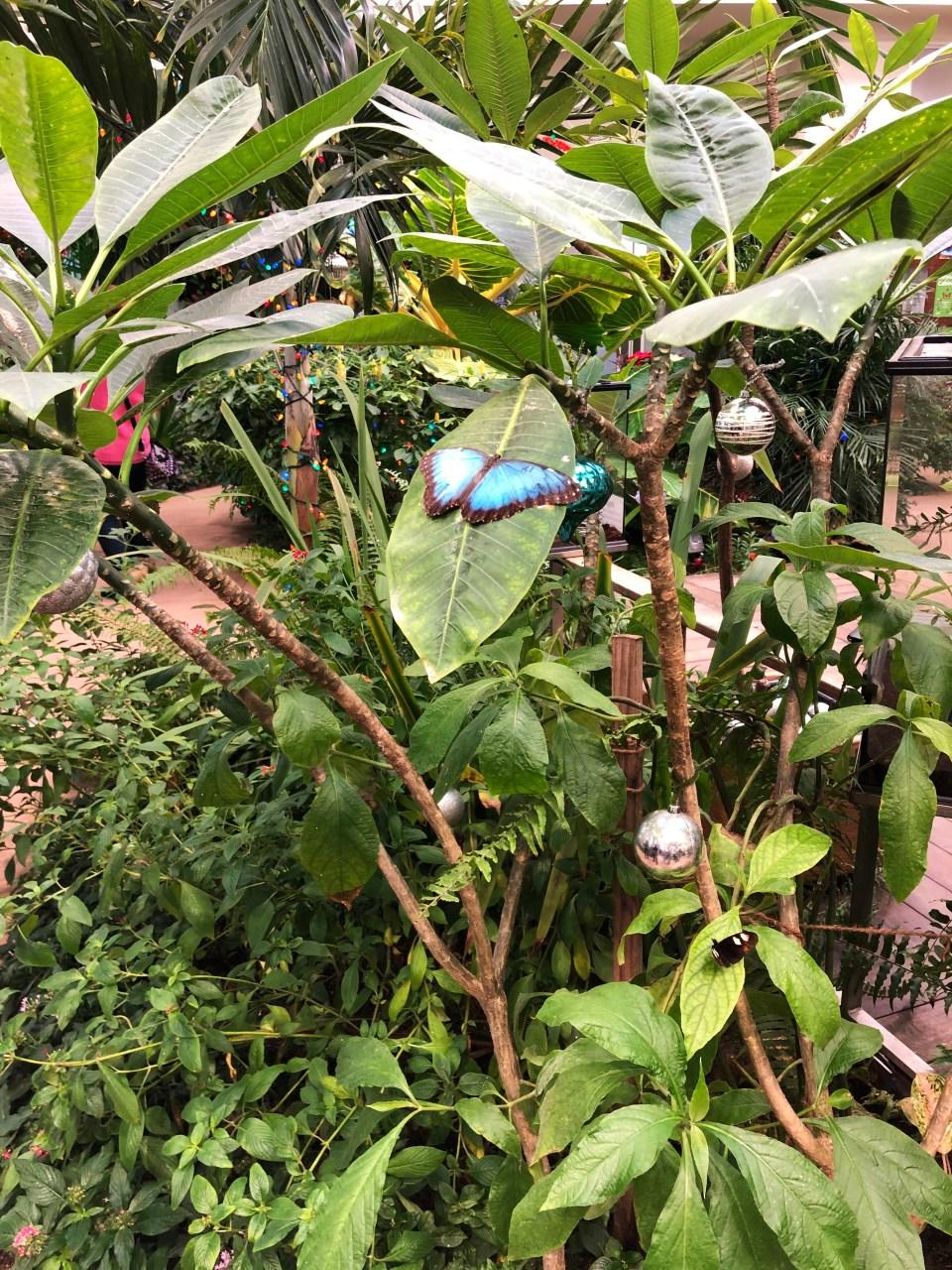 Hershey Gardens - Butterflies