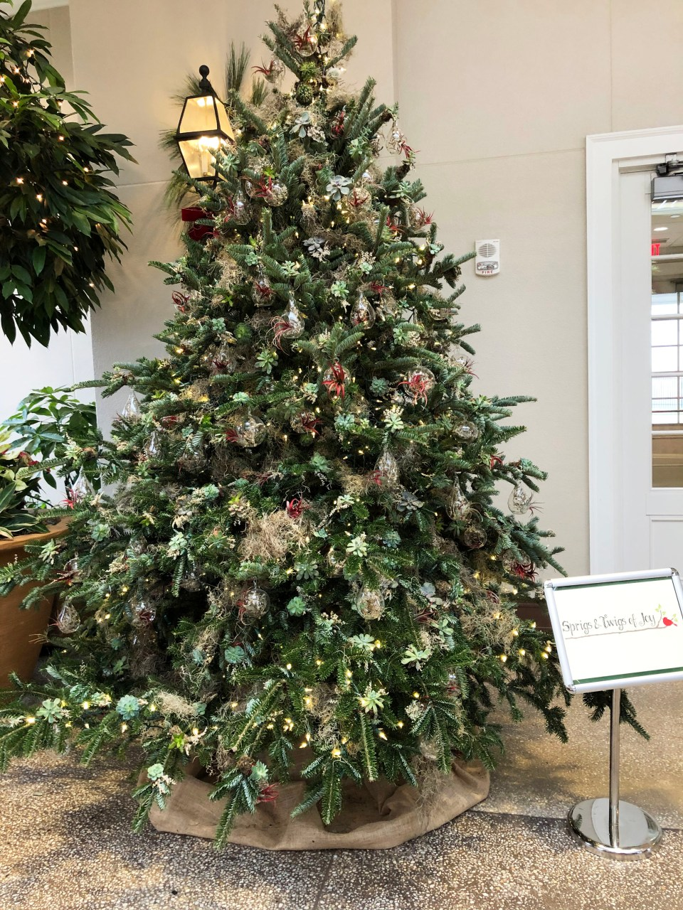 Hershey Gardens - Christmas Tree Showcase 4