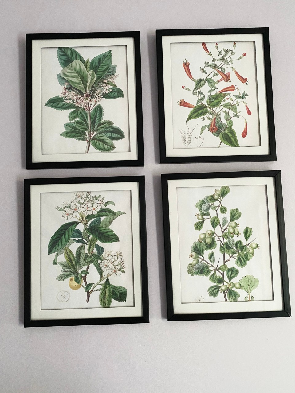 Vintage Floral Prints 2
