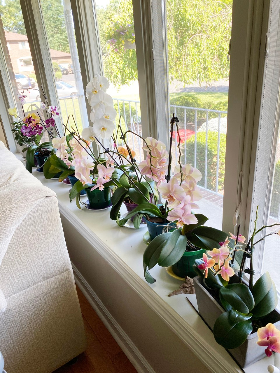Orchid Care 10