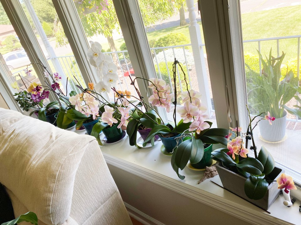 Orchid Care 9