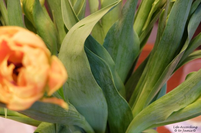 Tulips - Green Leaves