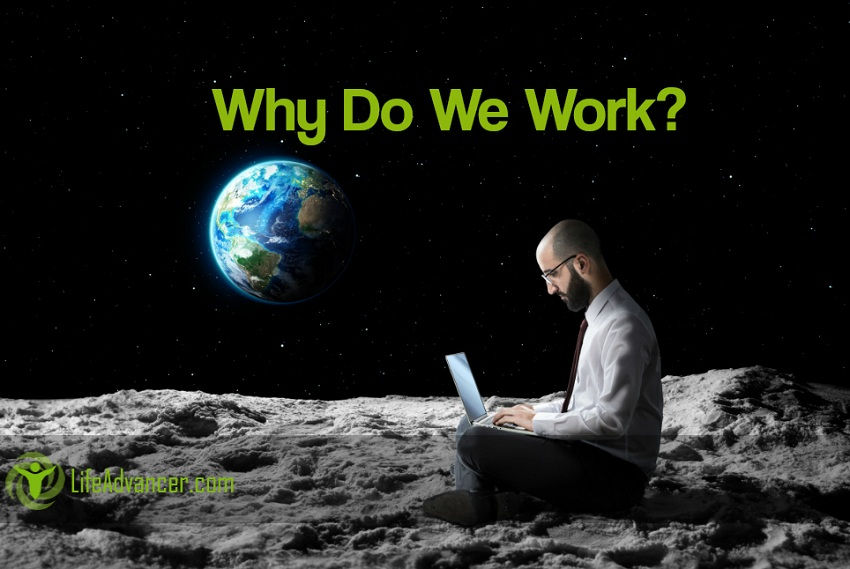 Why Do We Work? Humans Is The Only Species On The Planet