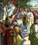 zacchaeus in tree