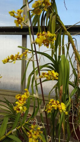 An orchid--the inside gardens have lots of beautiful orchids