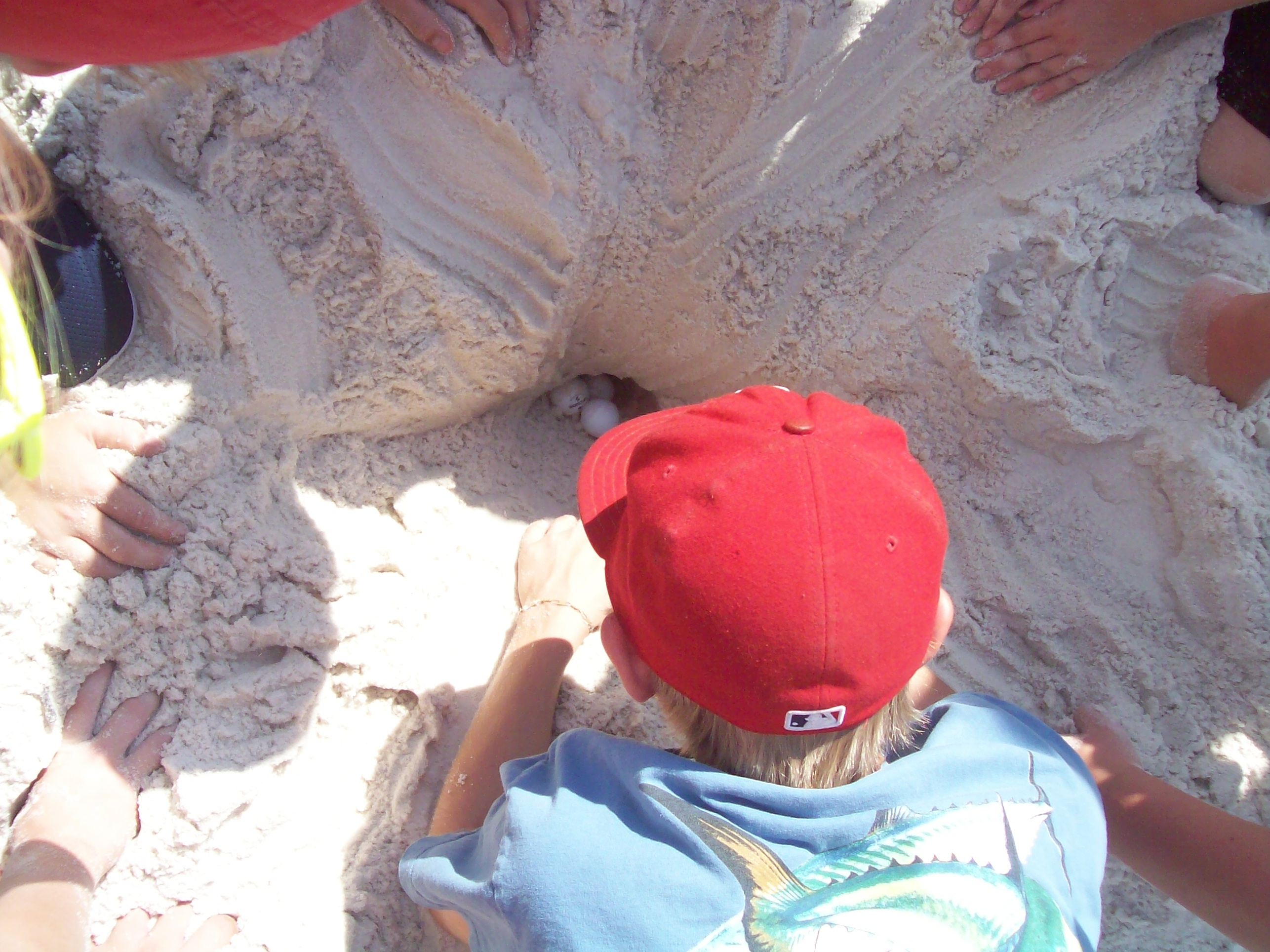 Digging for pretend turtle eggs to measure the depth of the nest...only if the nest needs moving.