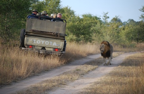 So you want to go on a once-in-a-lifetime trip? Safari in South Africa is one of the best things to do in the entire country - plus you can see the Big 5 there! How safe is it to do a solo safari in South Africa? How expensive is it? What else should you consider? Here are my tips from a recent safari in South Africa!
