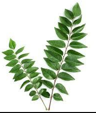 October-6-Curry-Leaves.jpg