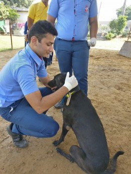 Dhyan Foundation celebrates World Animal Day at its Shelter for Strays