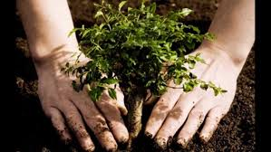 #PlantaTreeDrive by Detel Foundation