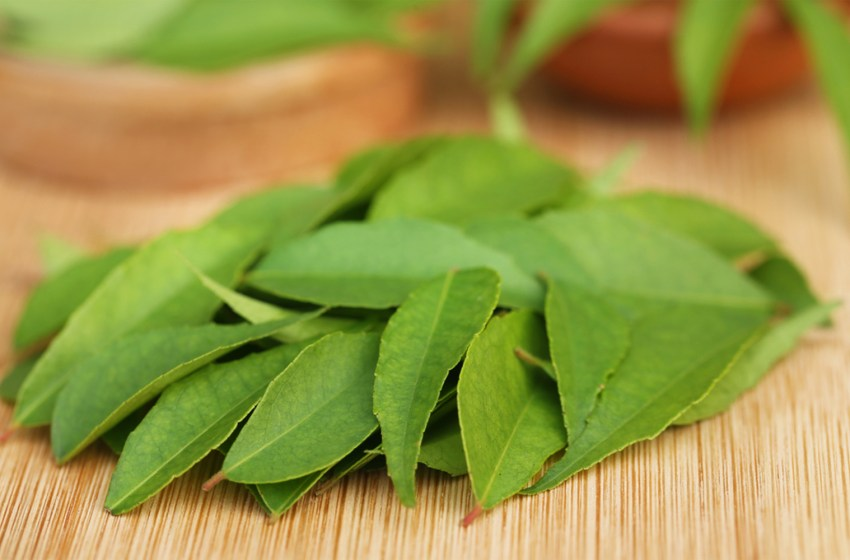 Curry leaves: A multipotential plant