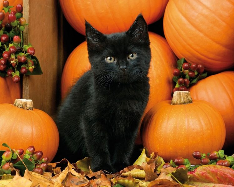 Free Fall Pumpkin Wallpaper Health Benefits Of Pumpkin For Cats And Dogs Life Amp Soul