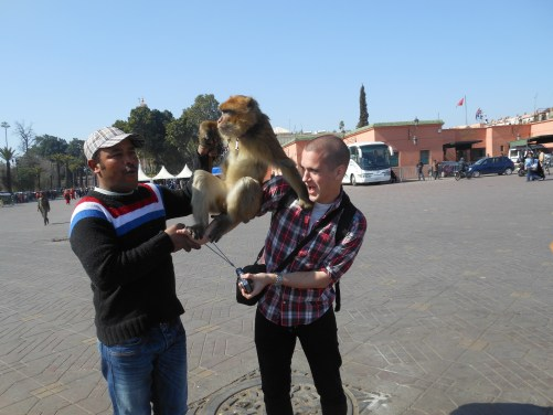 monkey marrakesh