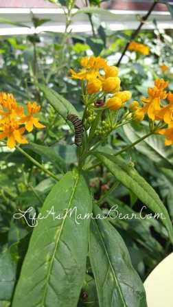 meijer-gardens-caterpillar