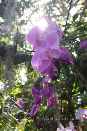 meijer-gardens-flower