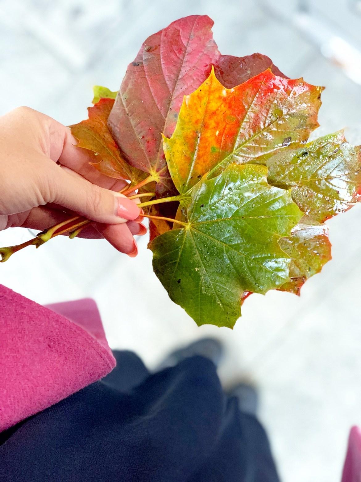 Oh Hello Autumn